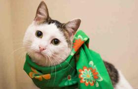 Katie-cat.png