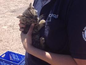 Kitten-Foster.png
