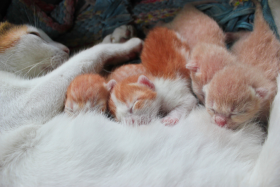 Kittens-On-Fur-Blanket-Web-Small.png
