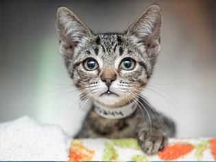 animal-welfare-101_315x237 2.png