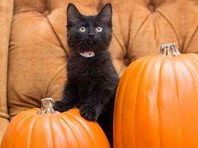 cat-pumpkin-etails.png