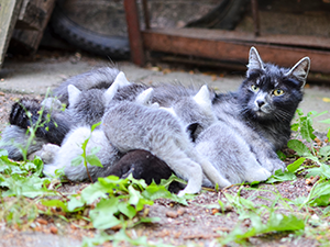 foundkittens_300x225.png