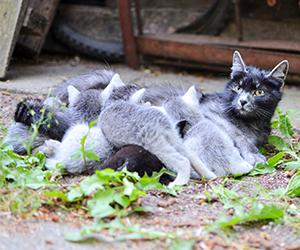 kitnap-kittens_300x250.png