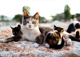 kitten-season-etails-4-16.png