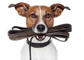 leash-training-etails-4-30.png