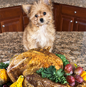 thanksgiving-pet-safetey-11-14.png